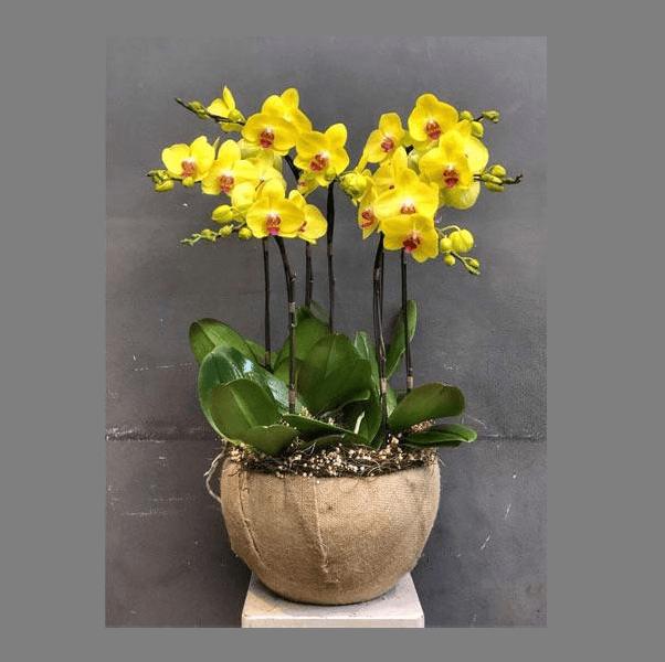 hình ảnh hoa đẹp tại Biên Hòa