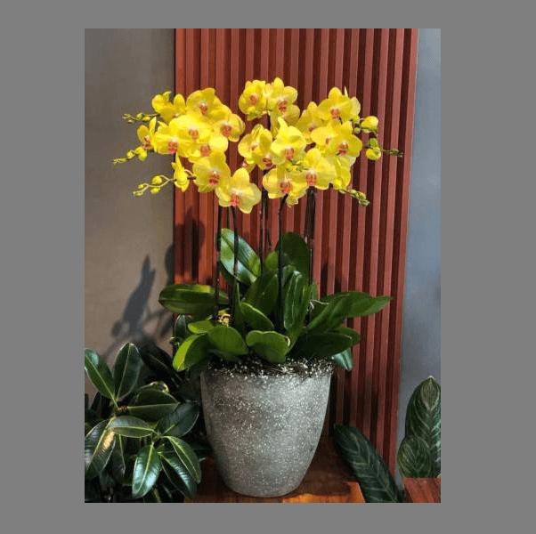 Chuyên cung cấp hoa tươi quận 2 giá rẻ