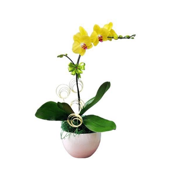 hoa đẹp tại Biên Hòa