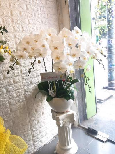 hoa giá rẻ tại Biên Hòa