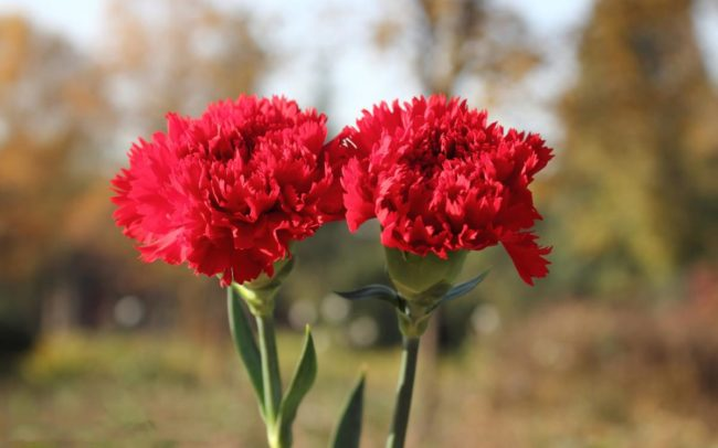 giỏ hoa tươi 8 3