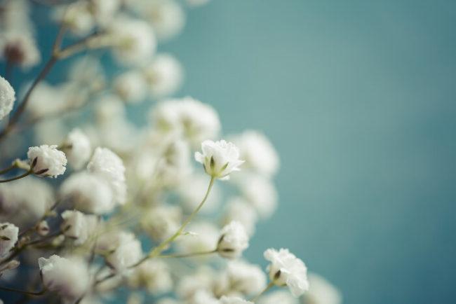 hoa tươi Bình Tân