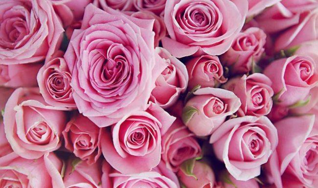 mua buôn hoa tươi tại hà nội