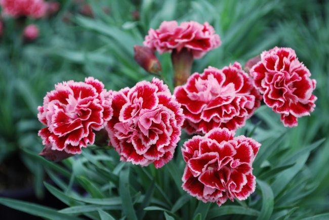 hoa tươi phú nhuận 2