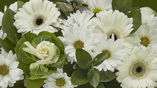 hoa tươi giá rẻ nhất tây ninh 2