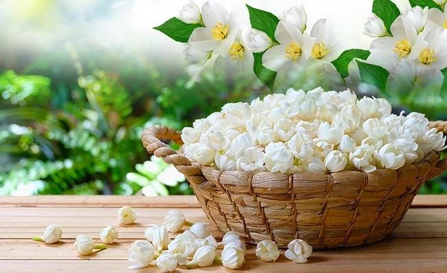 bí quyết chăm sóc hoa nở về đêm 2