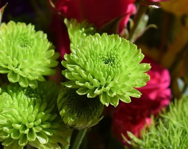 bí quyết tặng hoa lấy lòng mẹ chồng 1