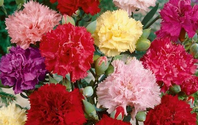 tặng hoa gì để xin lỗi bạn gái hay vợ 2
