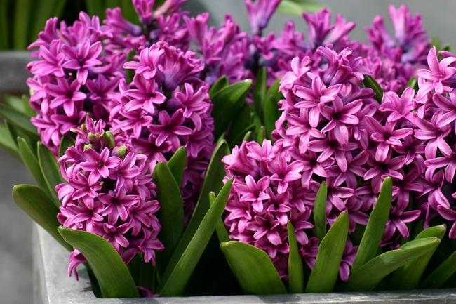 tặng hoa gì để xin lỗi bạn gái hay vợ 3