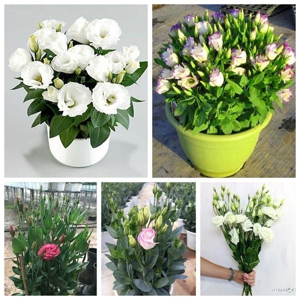 loài hoa mang tài lộc cho gia đình dịp Tết