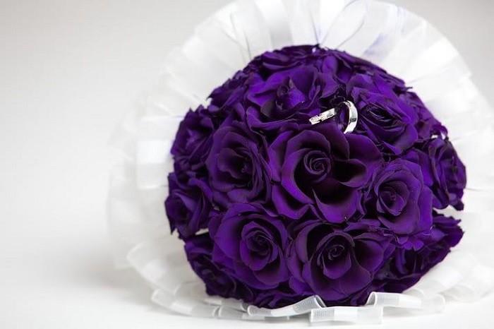 hoa hồng màu valentine