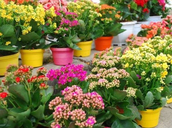 xu hướng chọn hoa tươi ngày tết