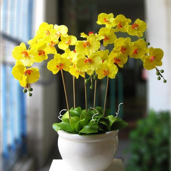 Hoa lan tặng mẹ