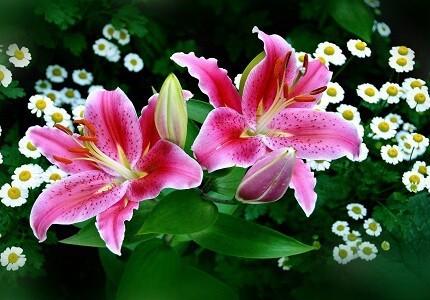 Chọn hoa ly làm hoa tốt nghiệp được không thông điệp của hoa ly