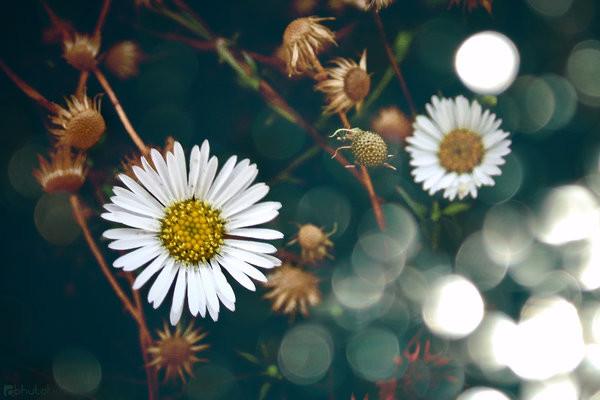 hoa tươi tặng mẹ gửi lời cảm ơn