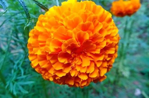 loài hoa tượng trưng cho sự mạnh mẽ