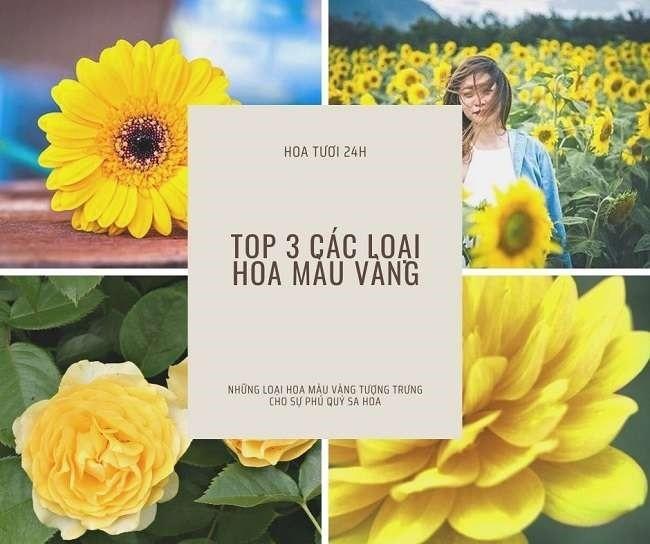 Các loại hoa màu vàng đẹp tại Việt Nam