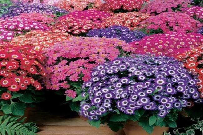 Điểm danh tên các loại hoa nở quanh năm