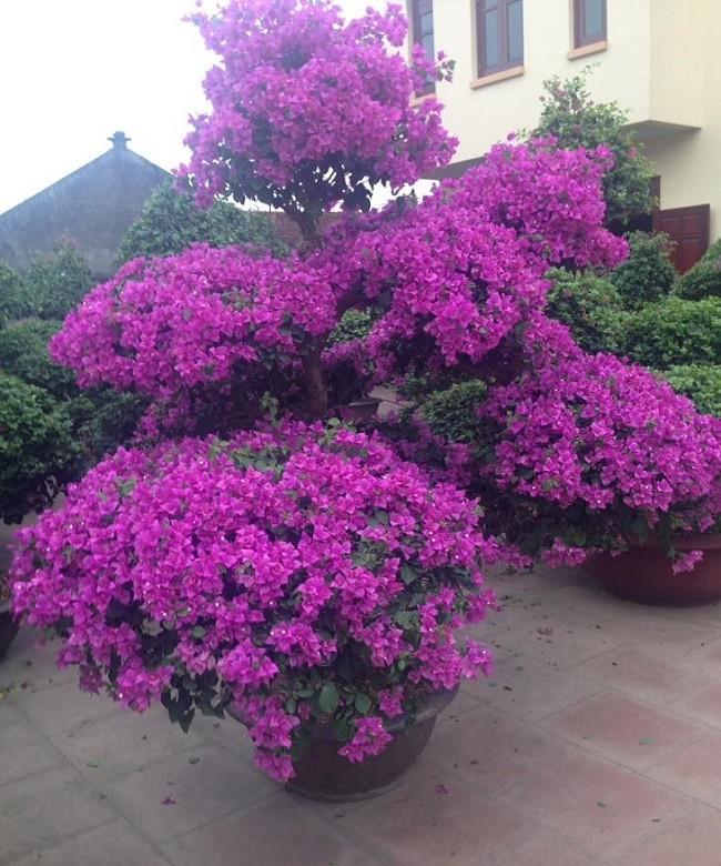 5 tên các loài hoa nở quanh năm
