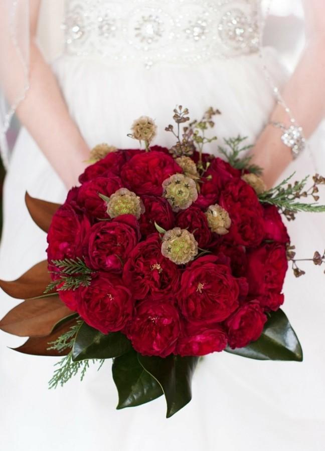 Hoa hồng nhung - Thế Giới Cây Và Hoa