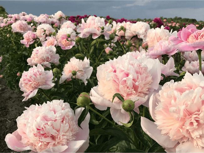 tên các loại hoa nở quanh năm