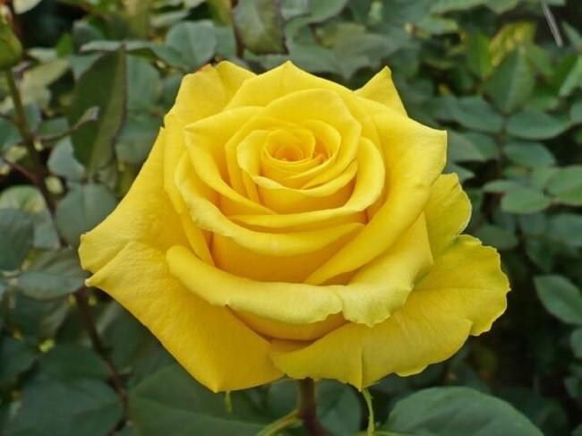 loại hoa đặc trưng cho tình bạn ý nghĩa nhất