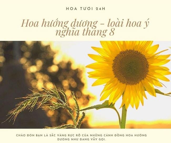 Hoa hướng dương loài hoa mang ý nghĩa cho tháng 7