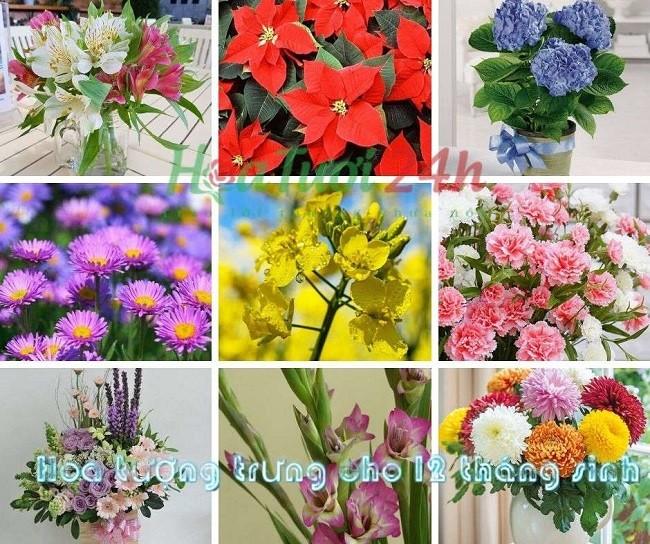 12 loài hoa tượng trưng cho 12 tháng sinh