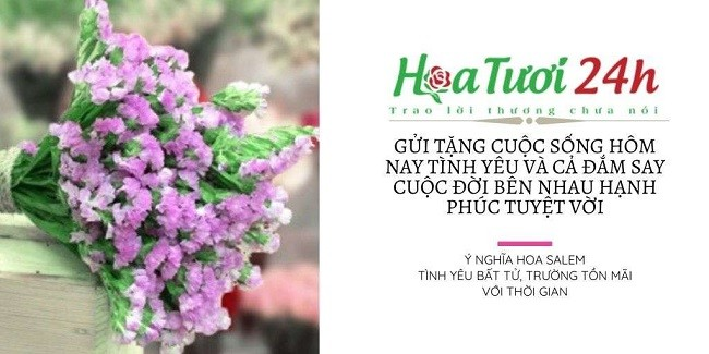Ý nghĩa hoa salem và những hình ảnh đẹp