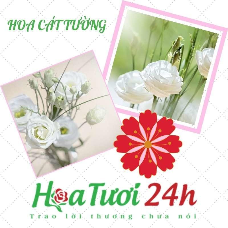hoa-cat-tuong-co-y-nghia-gi