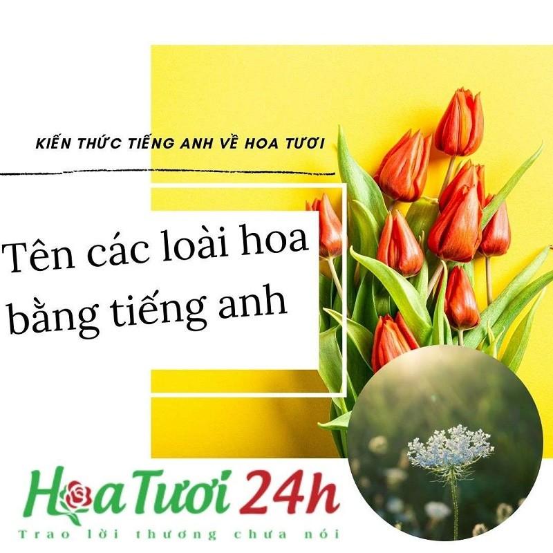 tim-hieu-ve-ten-cac-loai-hoa-thong-dung-bang-tieng-anh