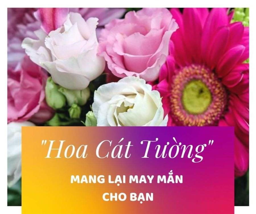 y-nghia-loai-hoa-cat-tuong