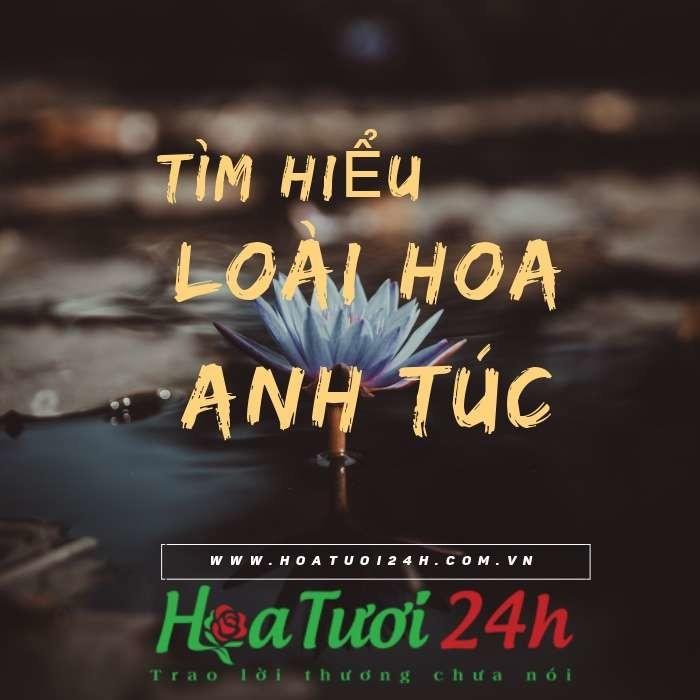 tim-hieu-y-nghia-hoa-anh-tuc