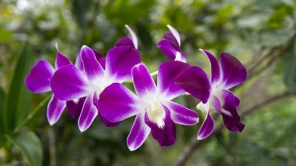 chọn hoa phù hợp với đối tượng