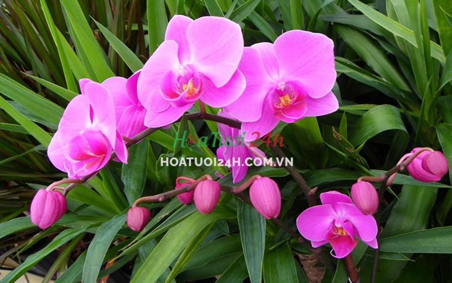 Các loài hoa tượng trưng cho 12 cung hoàng đạo hoa lan