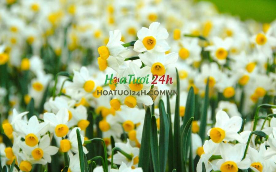 Các loài hoa tượng trưng cho 12 cung hoàng đạo hoa thủy tiên