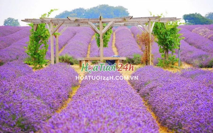 Các loại hoa màu tím Việt Nam