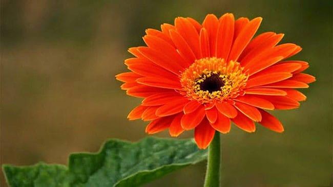 Các loài hoa màu cam