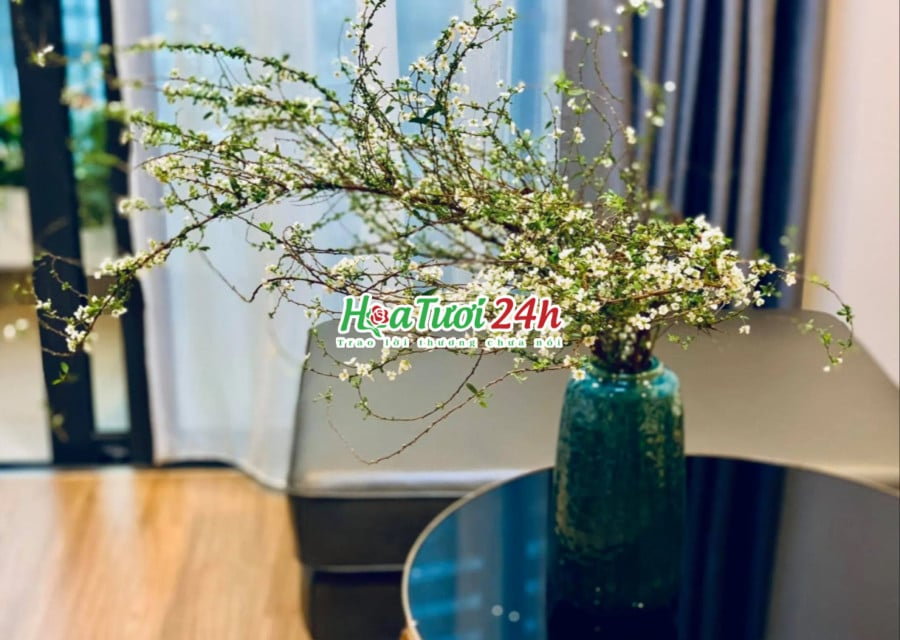 Cách cắm hoa tuyết mai tươi lâu